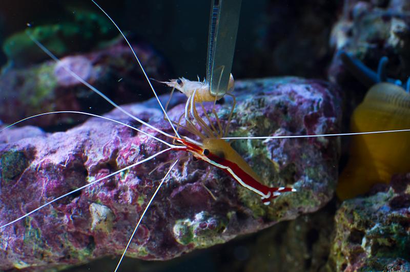 Salzwasser aquarium jensfiedler photography for Salzwasser aquarium fische