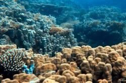 Unterwasserlandschaft Poseidon's Garden