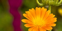 Blüte im Goldsteinpark