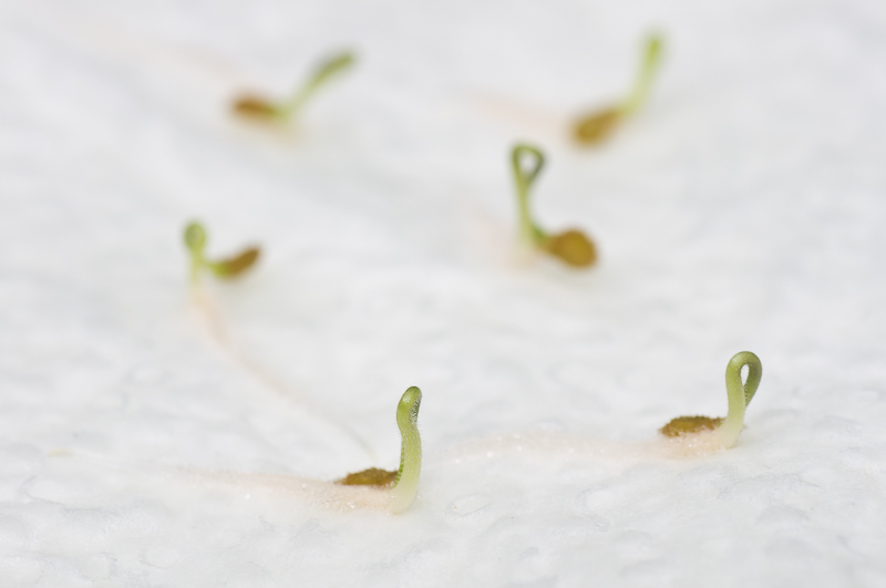 6/6 Samen sind nahezu zeitgleich geschlüpft