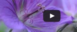 Kurzer Videotest mit Kamerakran