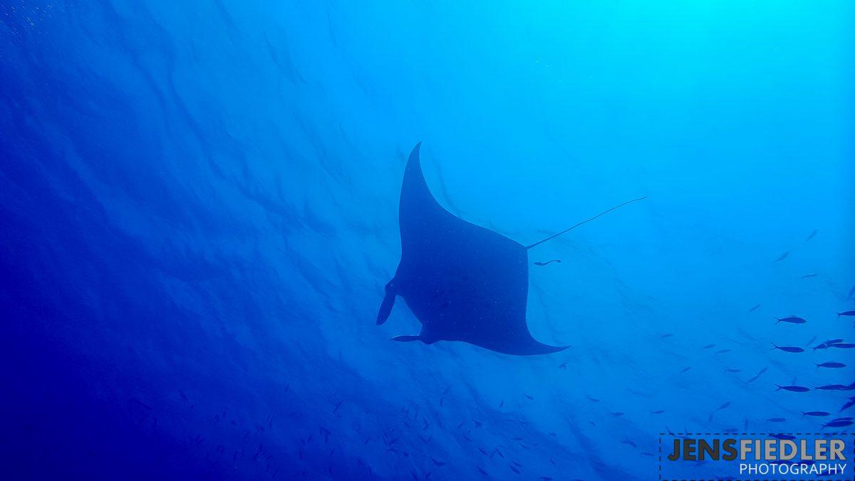Tauchurlaub Juni 2017 Sharm el Sheik mit den Millenium Divers