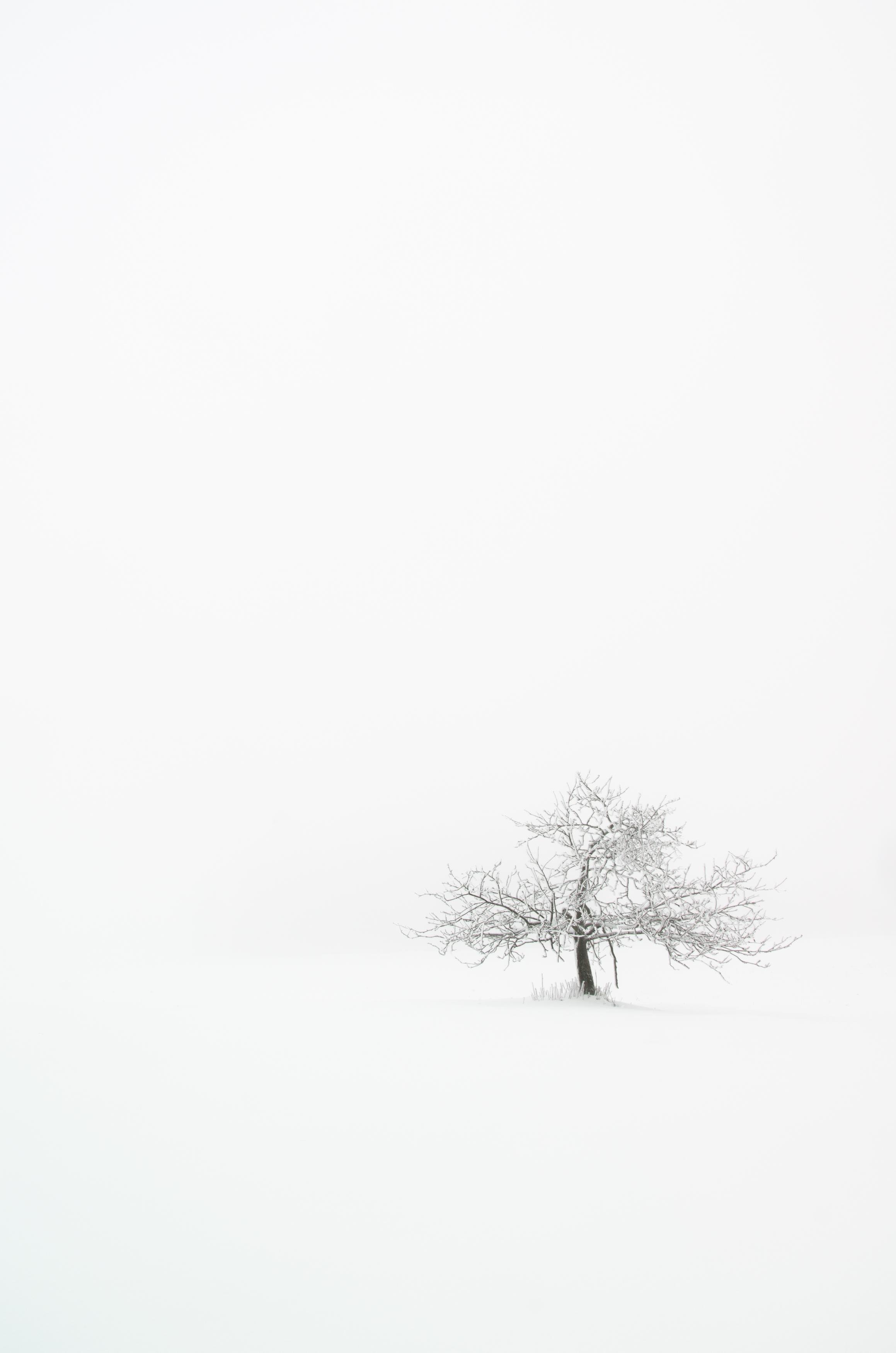 JensFiedler Photography