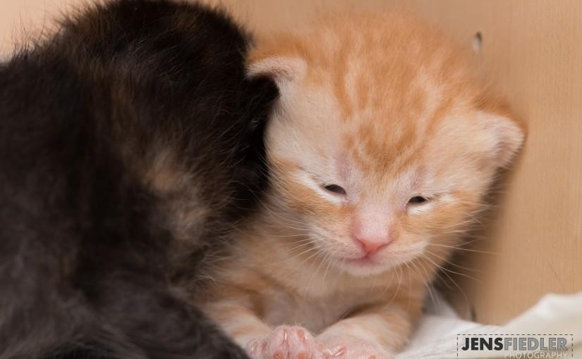 Kitten am 10.04.2015