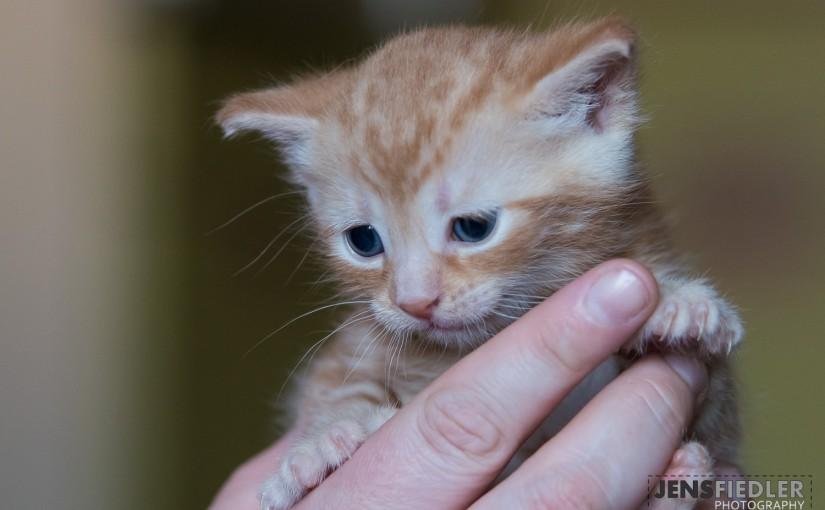 Kitten am 24.04
