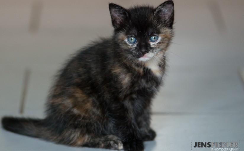 Kitten am 12.05