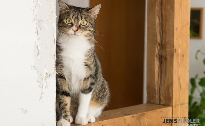 Katzentreffen