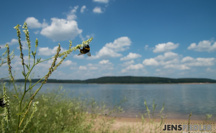Natur am Südufer des Großen Brombachsees